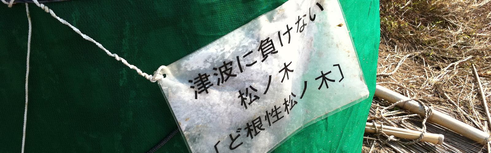 """""""奇跡の一本松""""/"""
